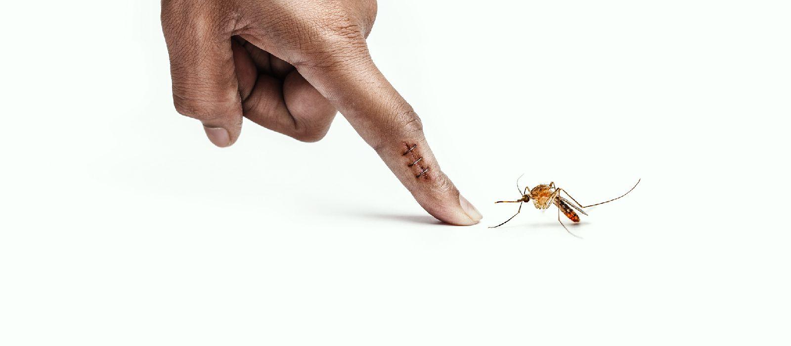 Prestanimo uzgajati komarce